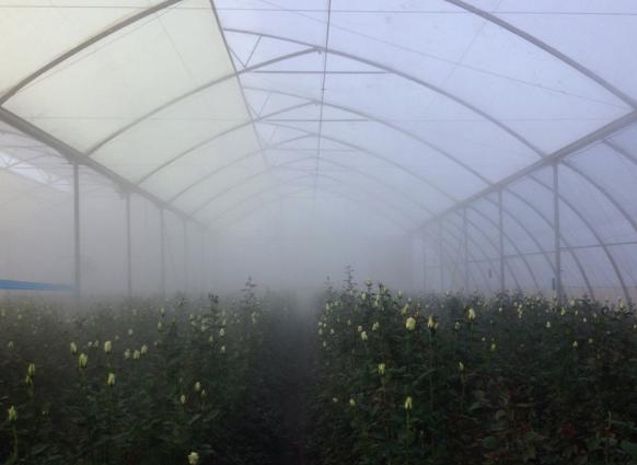 Vifra The Nebulization Fog System
